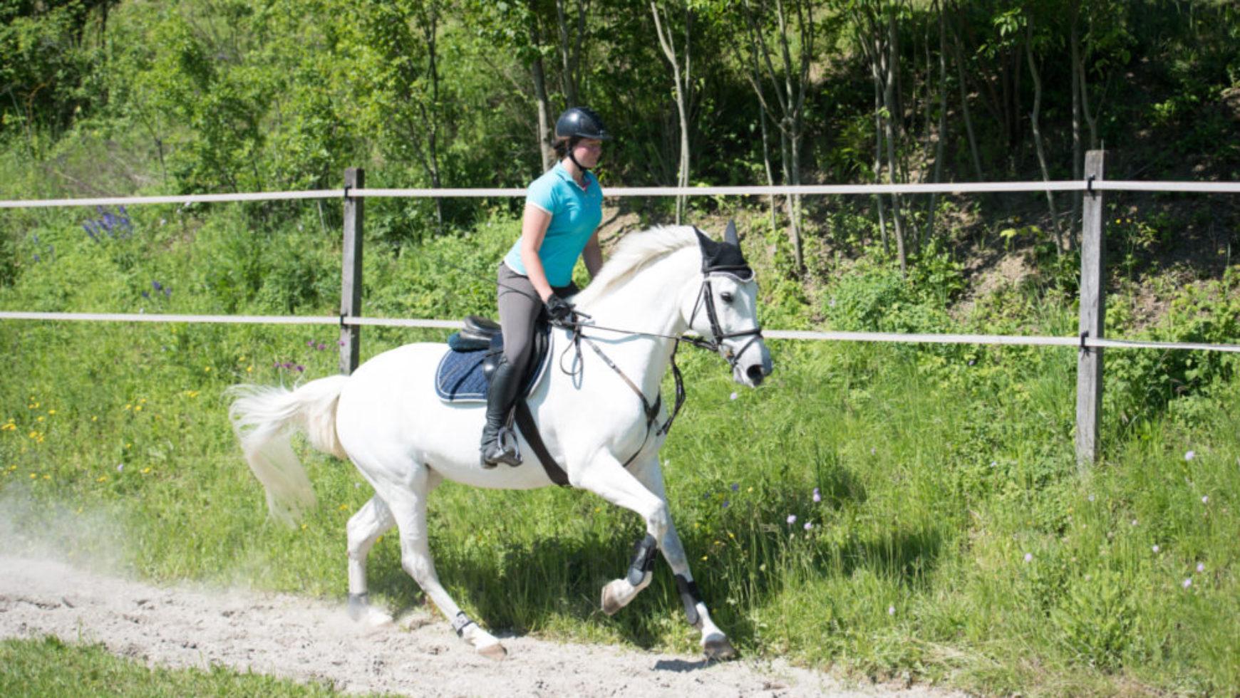Pferdefachfrau EFZ (100%)